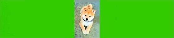 Image d'un petit chien pour le paragraphe de la page communication animale du site web Shopbreizh.fr