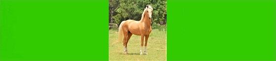 image d'un cheval pour la page communication animale du site web shopbreizh.fr